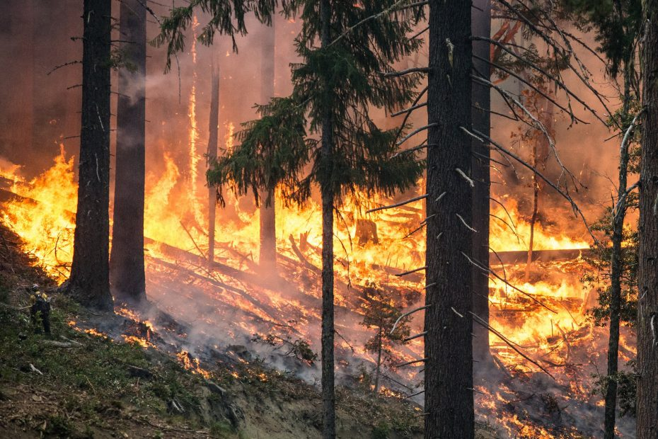 Trees burn in a wildland fire.