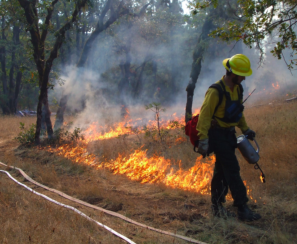 A first responder uses a drip torch to light a control line along the side of a road.